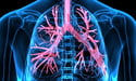 дыхательная система | respiratory system